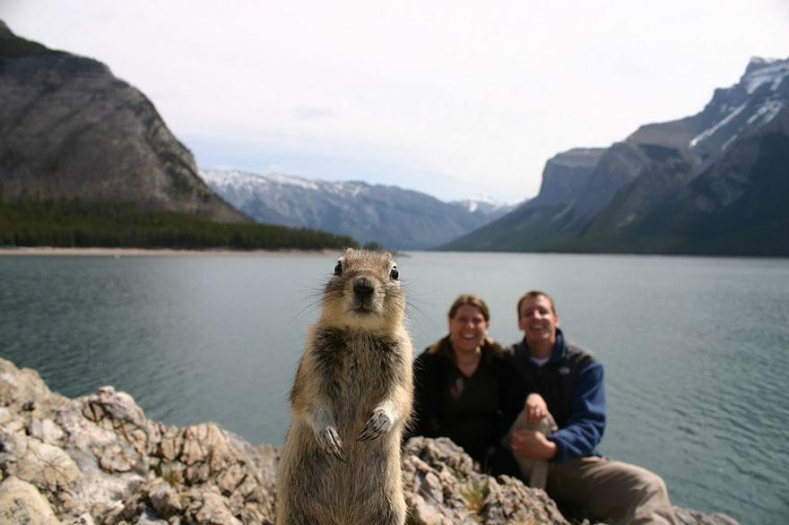 28 fois où des animaux se sont incrustés dans les photos des gens et nous ont fait rire