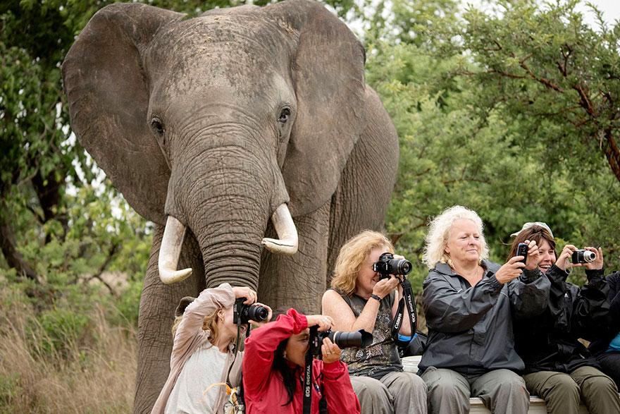 28 fois où des animaux se sont incrustés dans les photos des gens, et c'était à mourir de rire