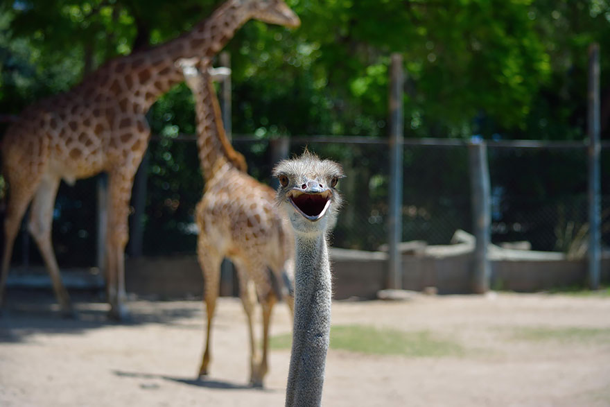 animal-photobomb-photo-gachee-26