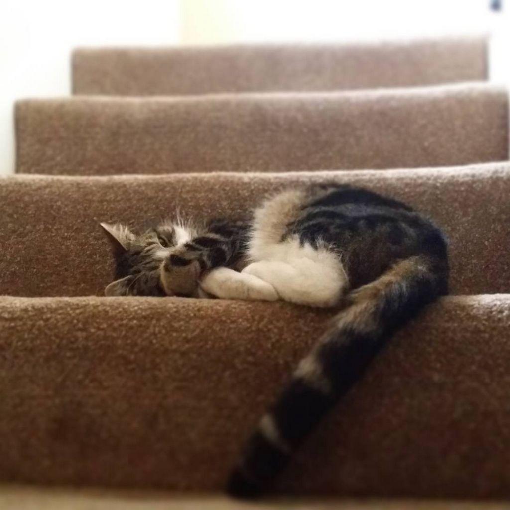 21 choses que seuls les amoureux des chats comprendront