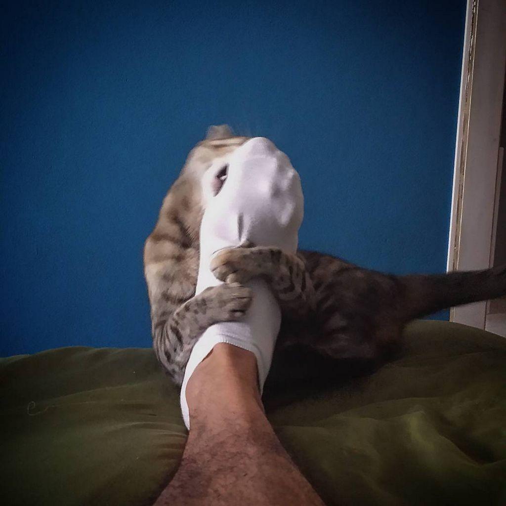 amoureux-chats-11