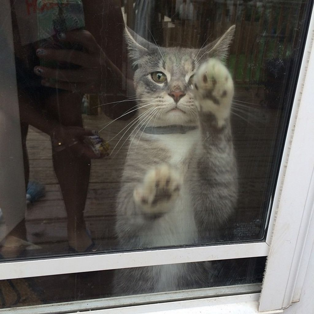 amoureux-chats-14
