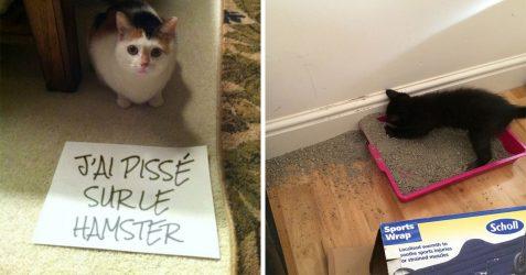 Ces deux chats sont si amoureux qu'ils ne peuvent plus réprimer leur désir