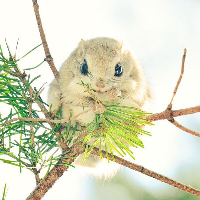 Ces écureuils volants sont les animaux les plus mignons sur Terre (12 photos)