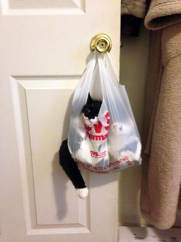 chat-regrette-mauvaise-decision-12
