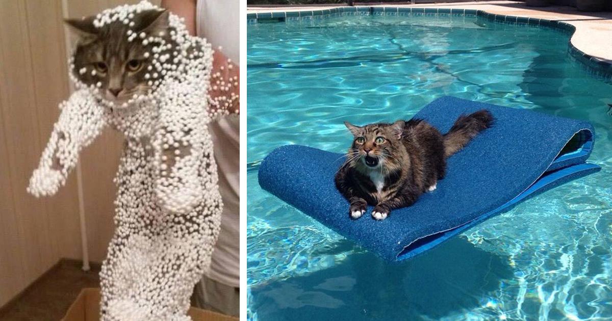 20 chats qui ont immédiatement regretté leurs mauvais choix