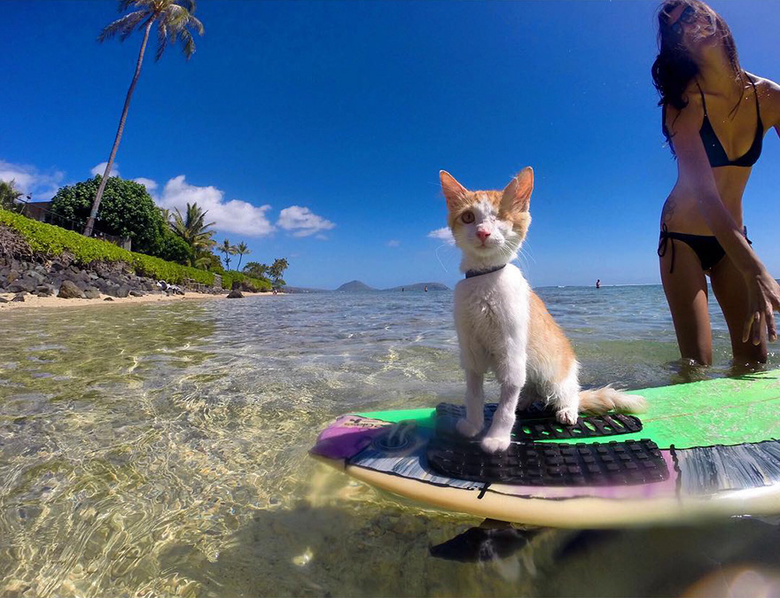 kuli-chat-surf-05