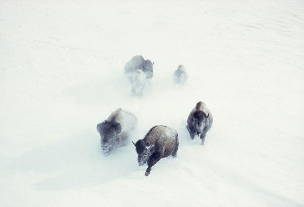 25 photos inédites des archives du National Geographic