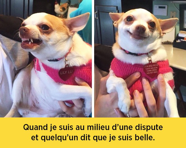 chiens-expressions-01