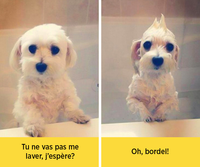 chiens-expressions-04