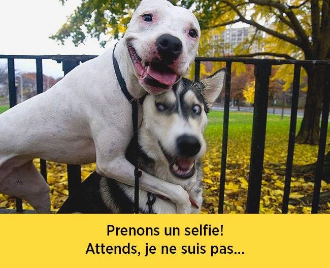 chiens-expressions-05