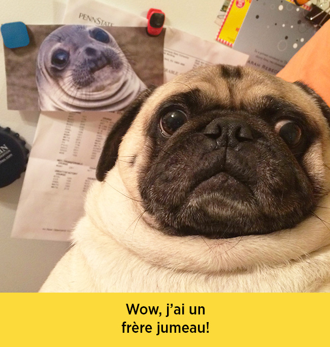chiens-expressions-06