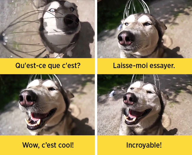 chiens-expressions-08