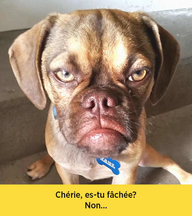 chiens-expressions-12