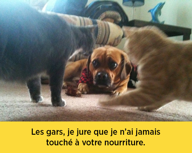 chiens-expressions-13