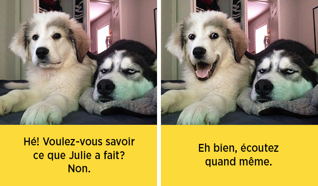 chiens-expressions-15