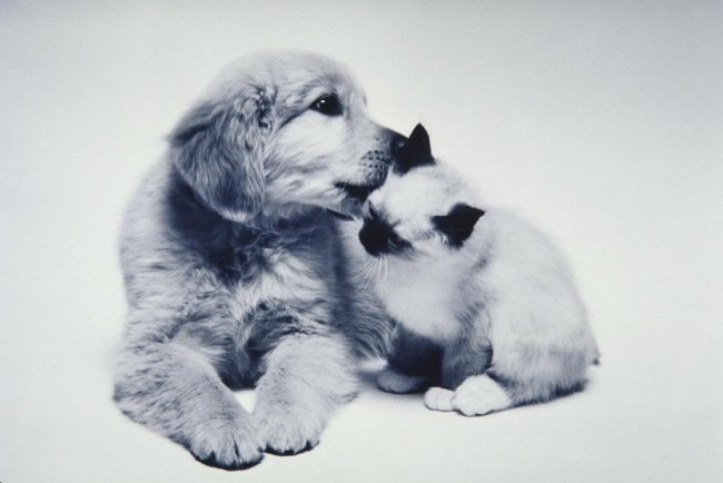 chiens-chats-amis-01