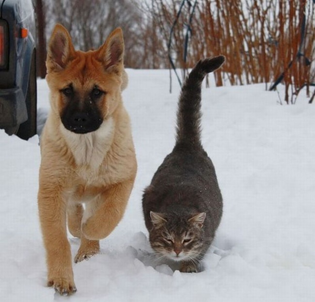 chiens-chats-amis-03
