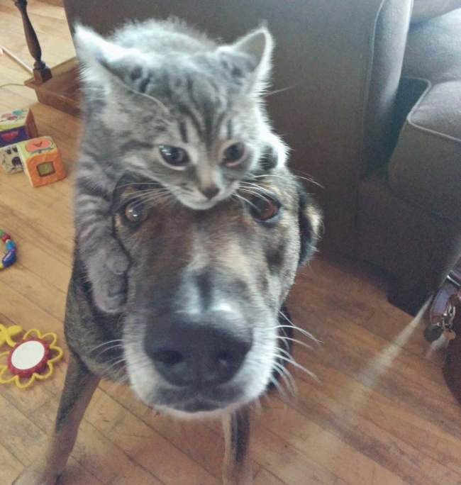chiens-chats-amis-05