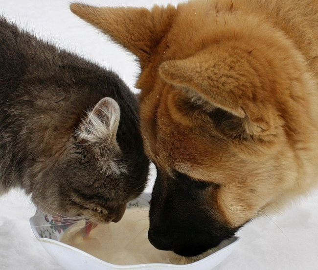 chiens-chats-amis-06