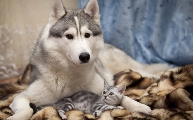 chiens-chats-amis-11