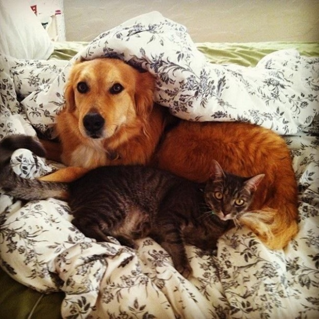 chiens-chats-amis-12