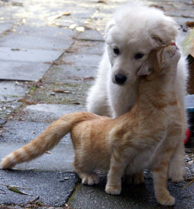 chiens-chats-amis-14