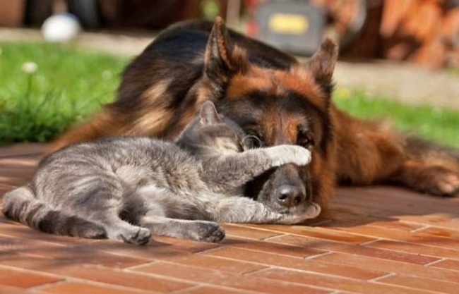 chiens-chats-amis-15