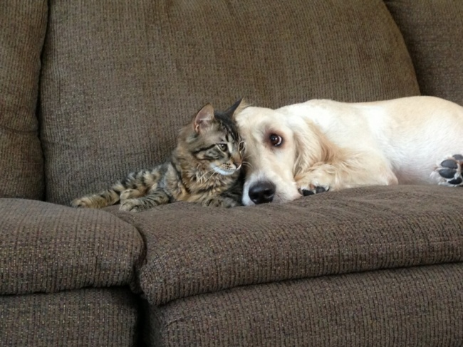 chiens-chats-amis-16