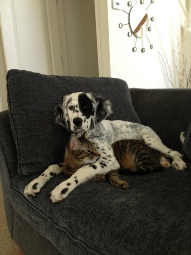 chiens-chats-amis-17