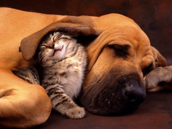 chiens-chats-amis-19