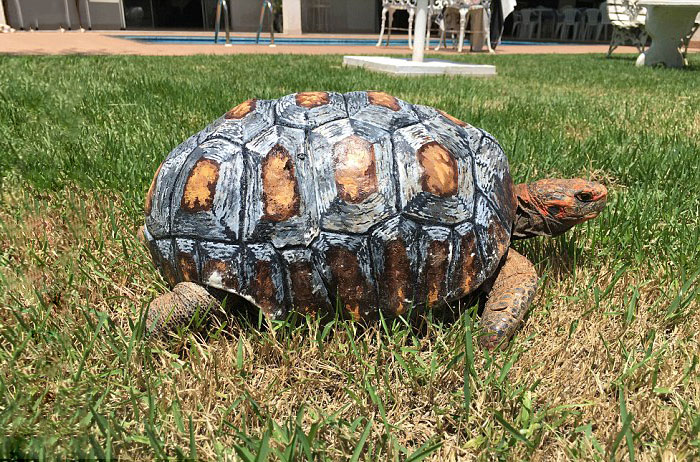 tortue-carapace-3d-freddy-06
