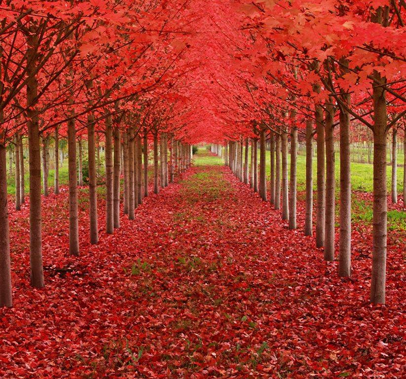 16 arbres les plus magnifiques au monde