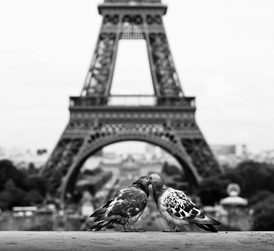 15 tendres photos prouvent que l'amour nous entoure