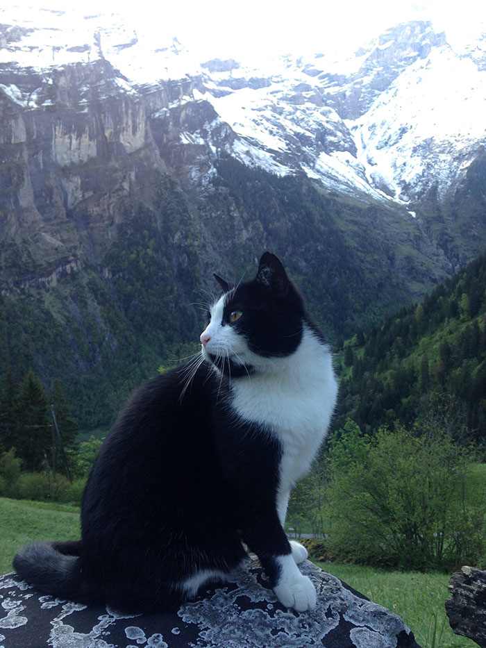 chat-guide-homme-montagne-05