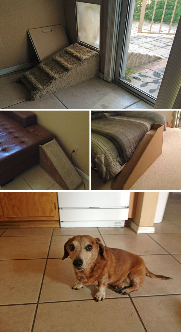 idees-creatives-chiens-01