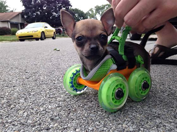 idees-creatives-chiens-11