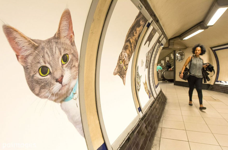 chats-metro-londres-cats-01