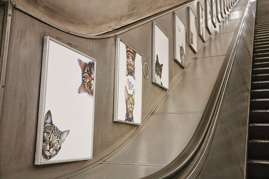chats-metro-londres-cats-02