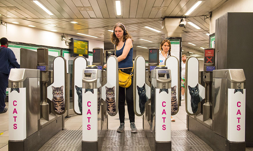 chats-metro-londres-cats-03