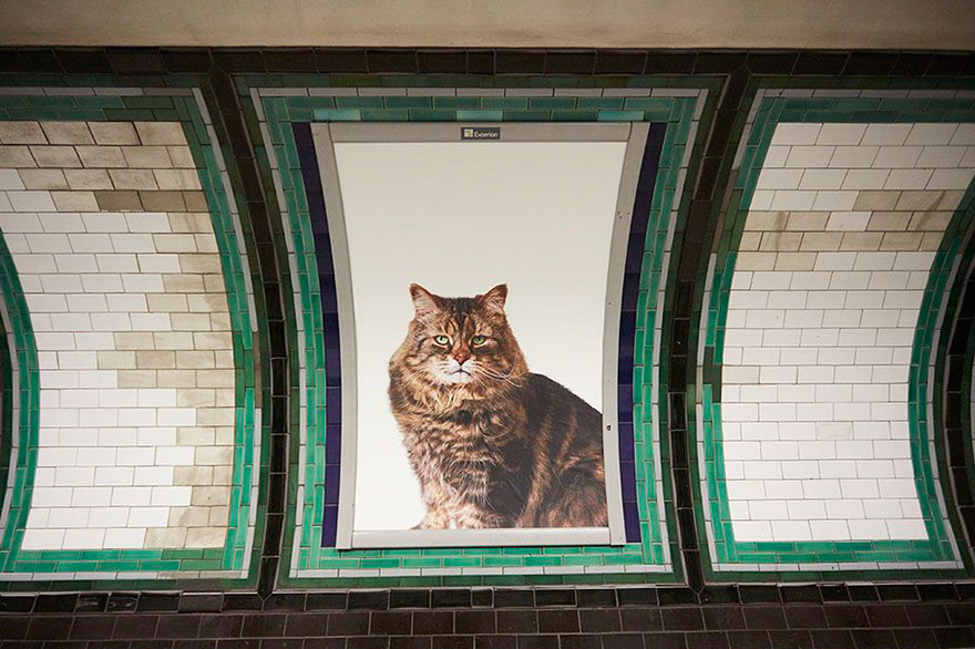 chats-metro-londres-cats-04