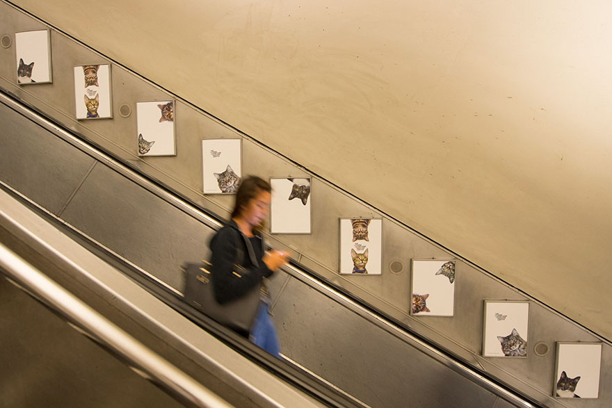 chats-metro-londres-cats-05