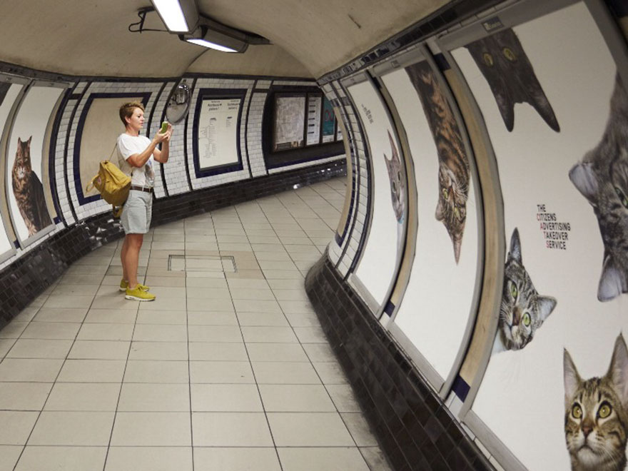 chats-metro-londres-cats-06