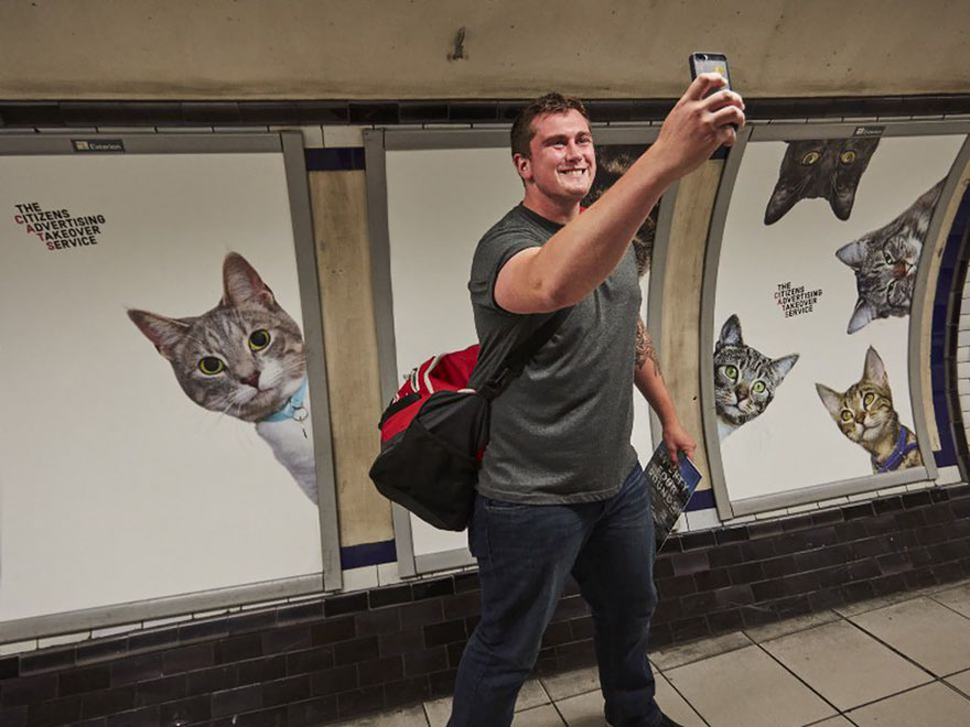 chats-metro-londres-cats-08