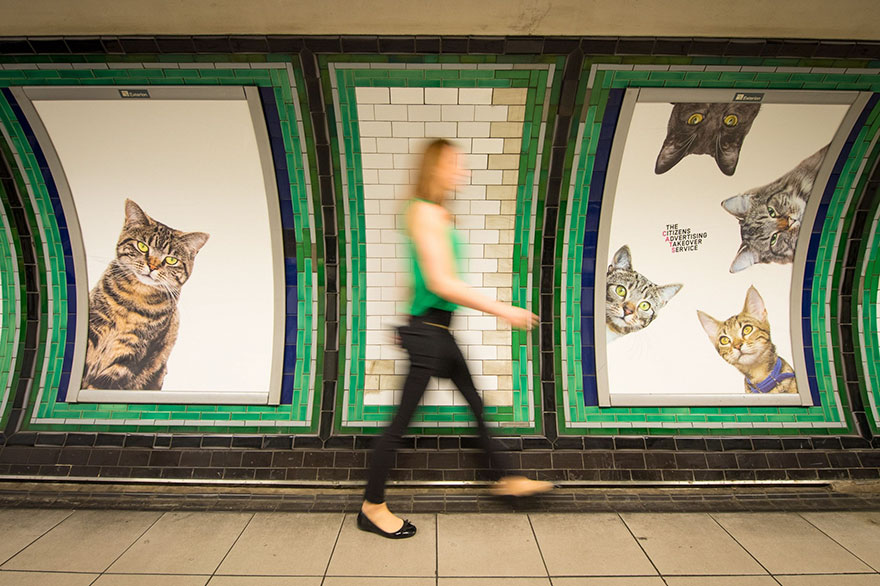 chats-metro-londres-cats-09