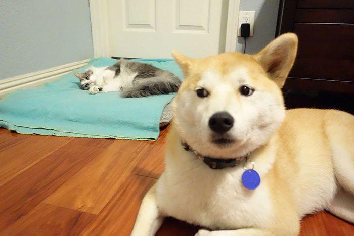 33 chats qui ont volé le lit des chiens et se sont foutus de leurs gueules
