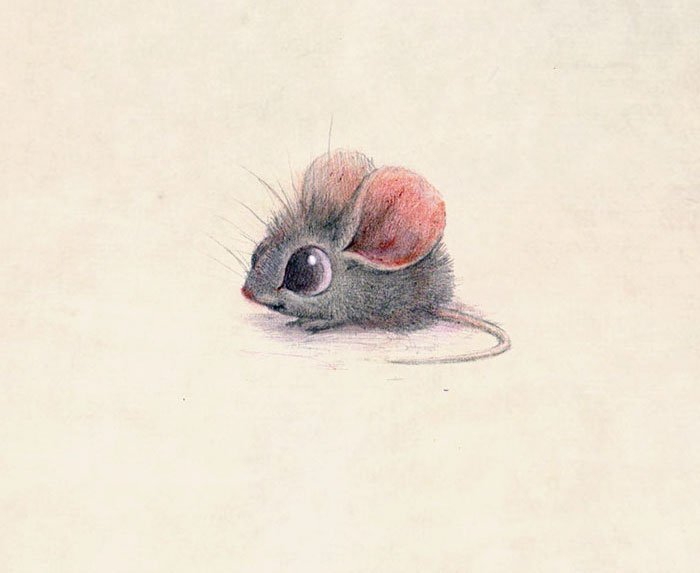 dessins-animaux-insectes-syndey-hanson-02