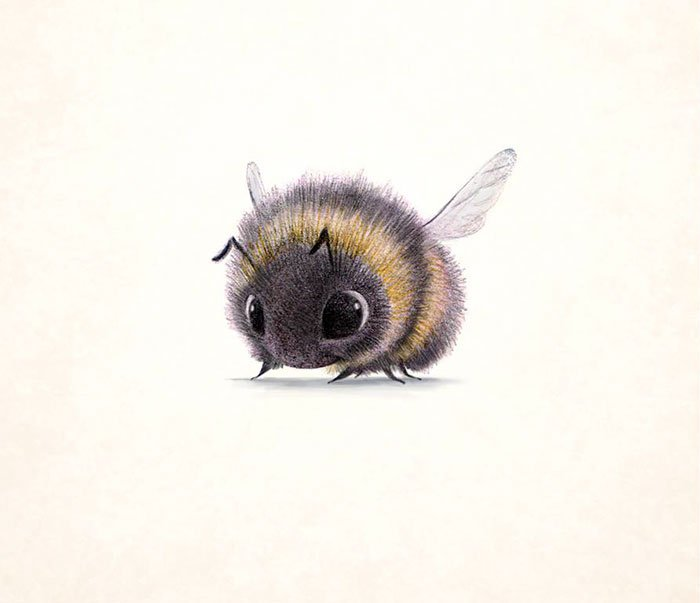 dessins-animaux-insectes-syndey-hanson-03