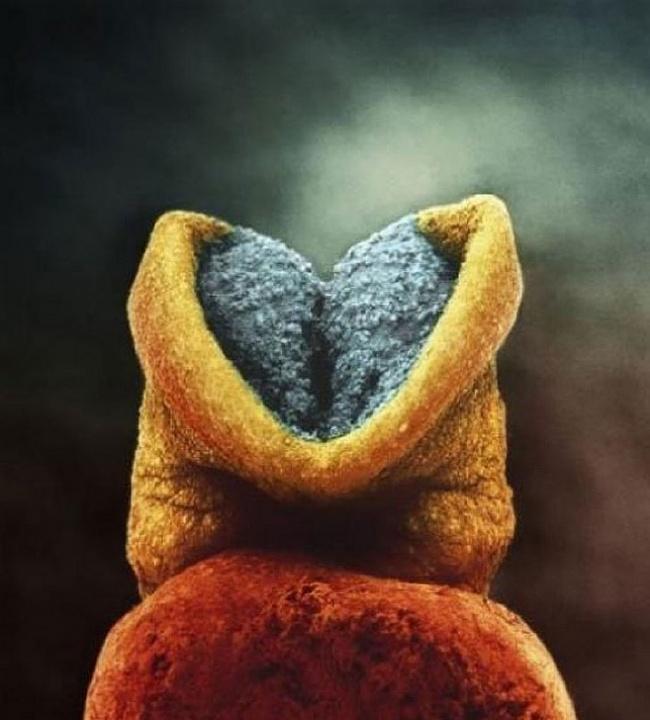Ces 15 photos à couper le souffle montrent le début de la vie d'un enfant, de la conception à la naissance