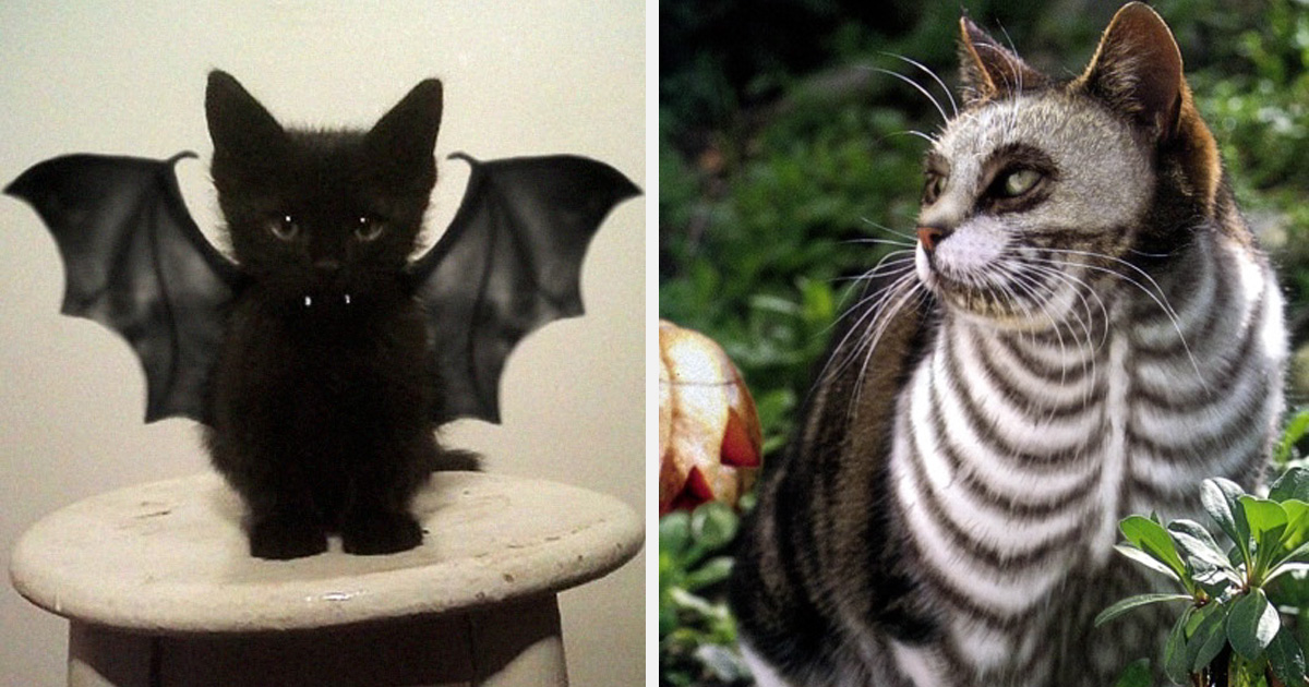 22 costumes d'Halloween pour chats terriblement cool